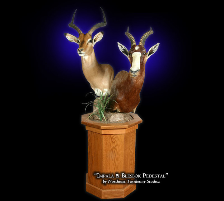 Impala & Blesbok Pedestal