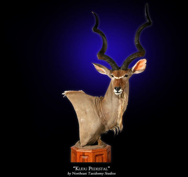 Kudu Mounts