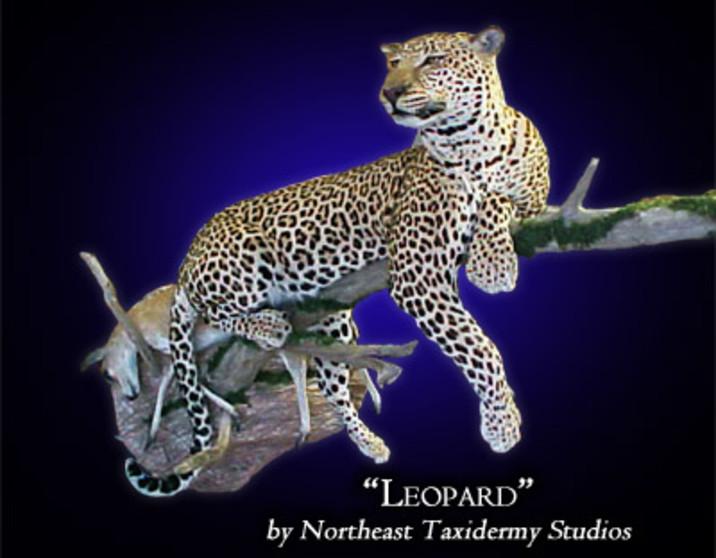 Leopard Mounts