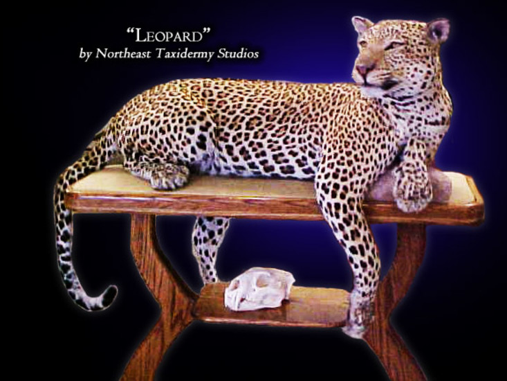 Leopard Mounts