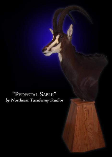 Pedestal Sable