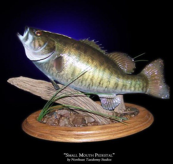 Small mouth pedestal mounts fish mounts by northeast for How to mount a fish