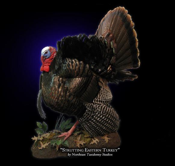 Strutting Eastern Turkey Mounts