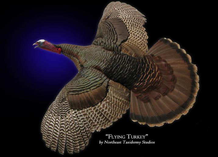 Turkey Mounts