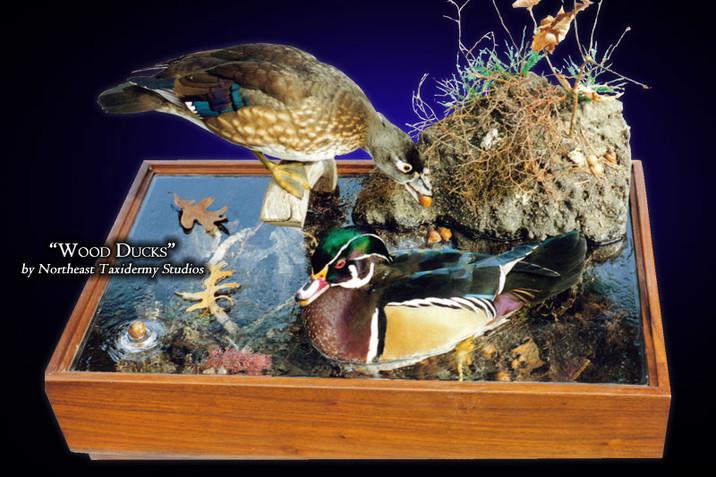 Wood Ducks Mounts
