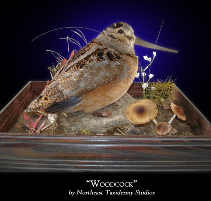 Woodcock Mounts