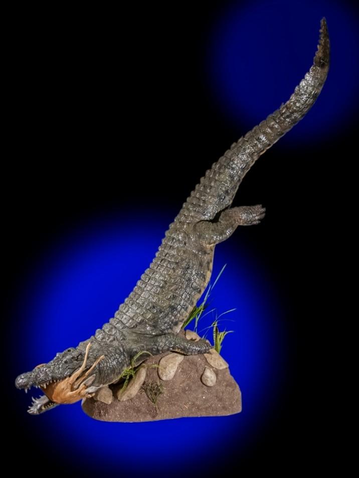 Crocodile Mounts