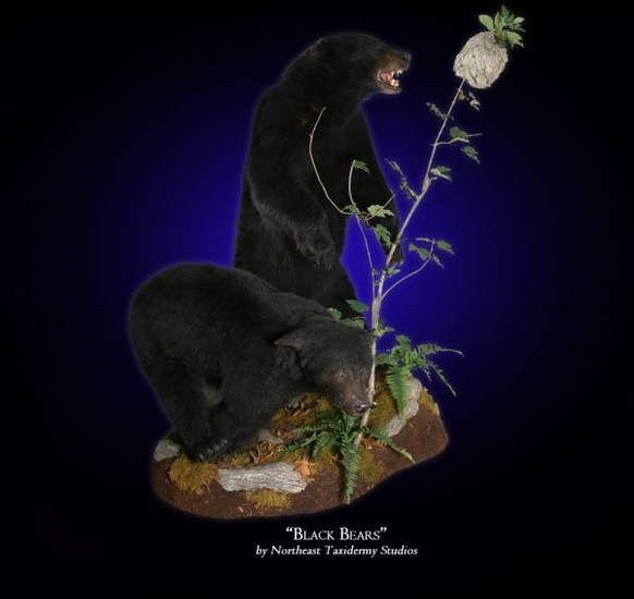 Black Bears Mounts