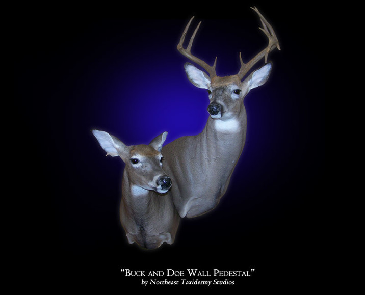 Whitetail Buck And Doe Wall Pedestal Mount Mounted