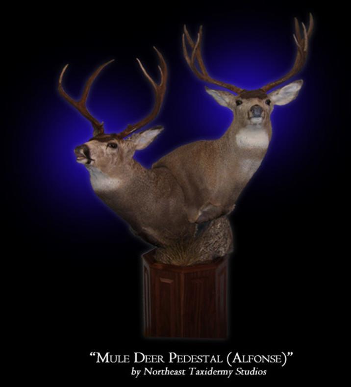 Mule Deer Mounts
