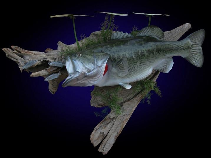 Large Mouth Bass Mounts