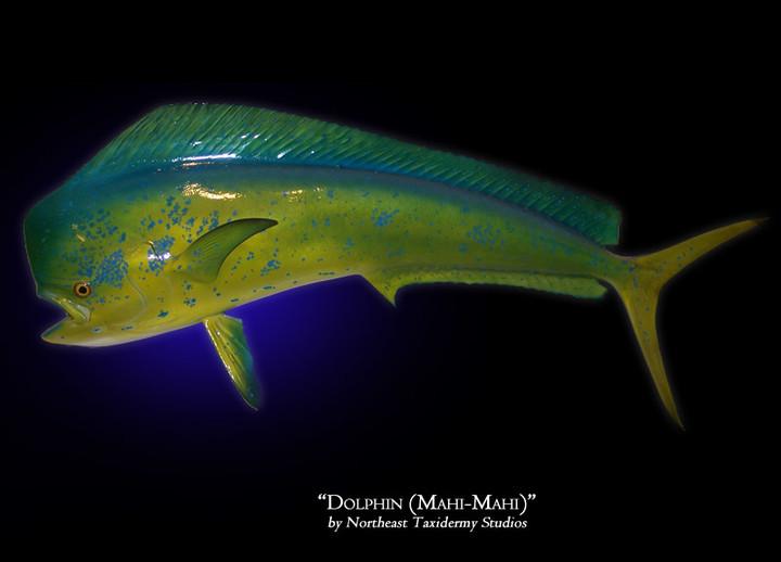 Dolphin (Mahi-Mahi)
