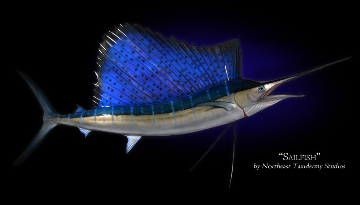 Sailfish Mounts