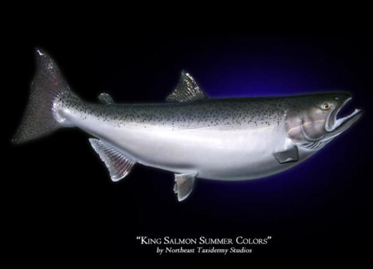King Fish Mounts – Articleblog info