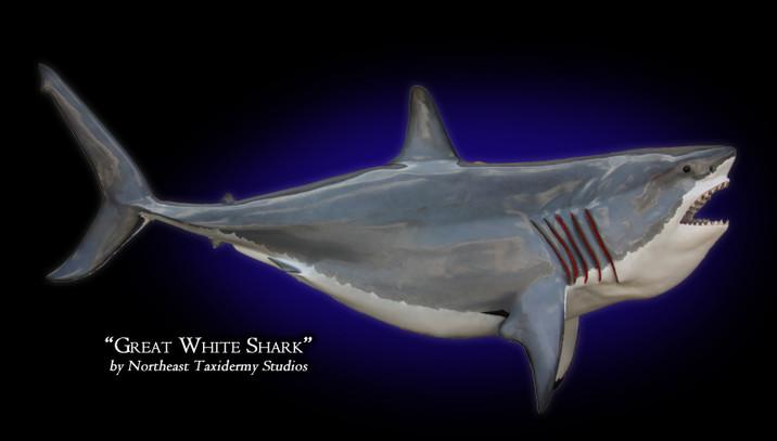 Great White Shark Mounts