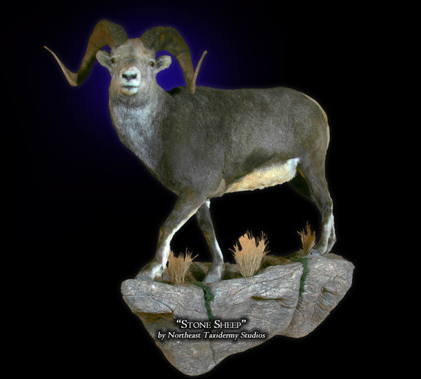 Stone Sheep Mounts