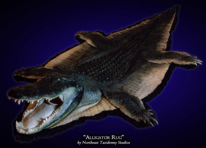 Alligator Mounts
