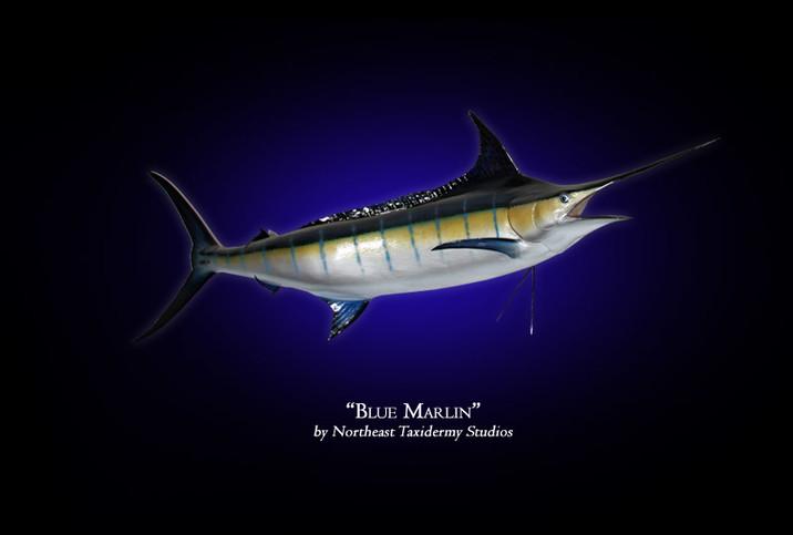 Blue Marlin Mounts