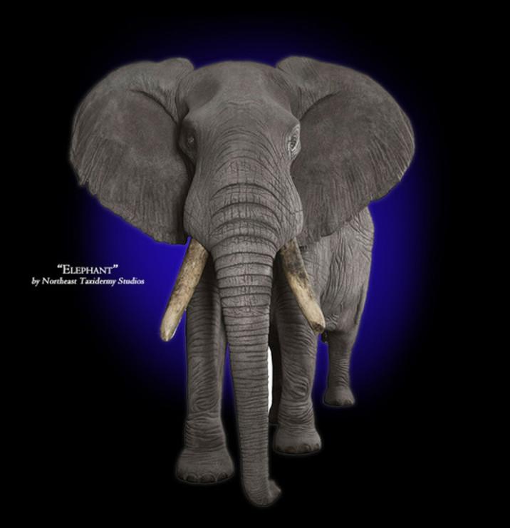 Elephant Mounts
