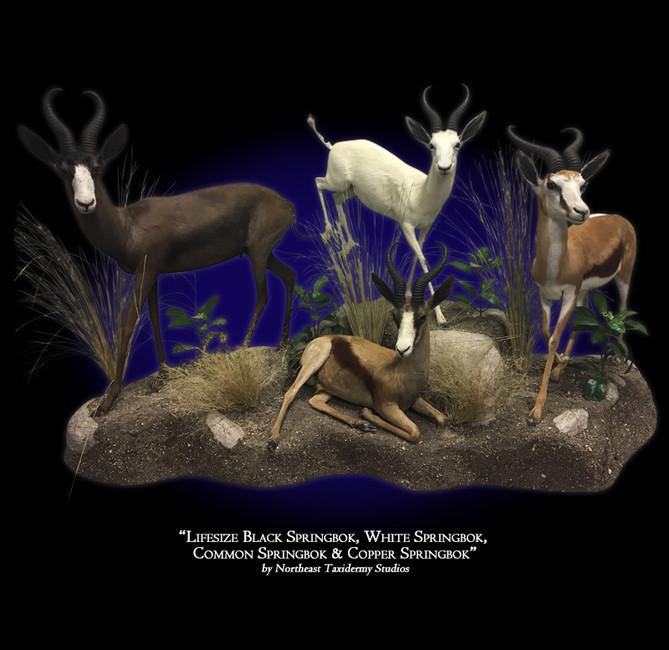 Lifesize Black Springbok, White Springbok, & Copper Springbok
