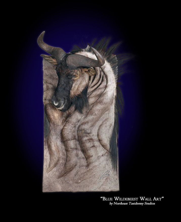 Blue Wildebeest Wall Art Mounts