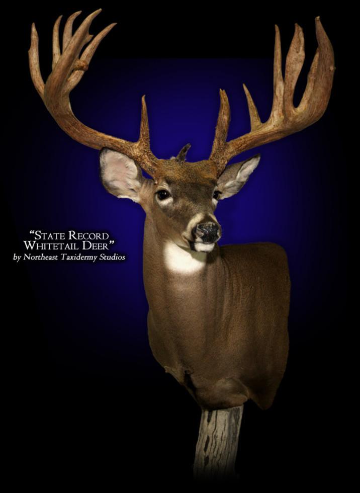 State Record Whitetail Deer Mounts