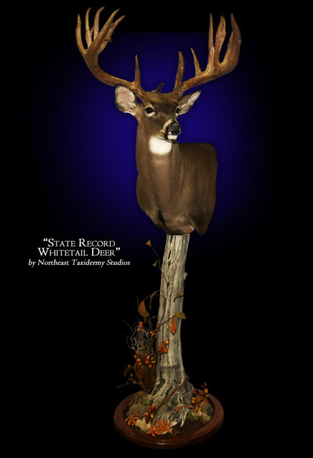 State Record Whitetail Deer