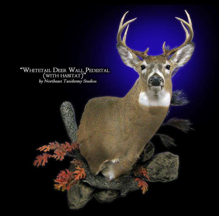 Whitetail Deer Wall Pedestal with Habitat Mounts