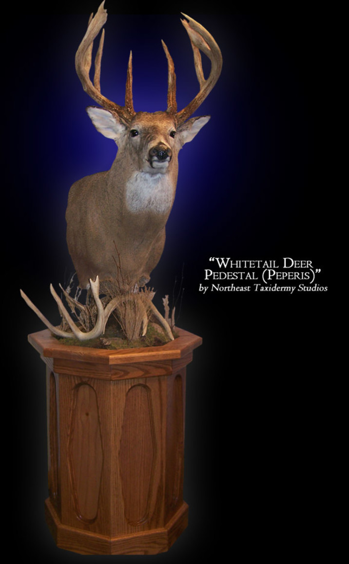 Pedestal Whitetail Deer Mounts