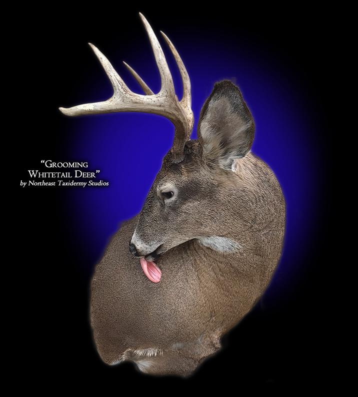 Whitetail Deer Grooming Mounts