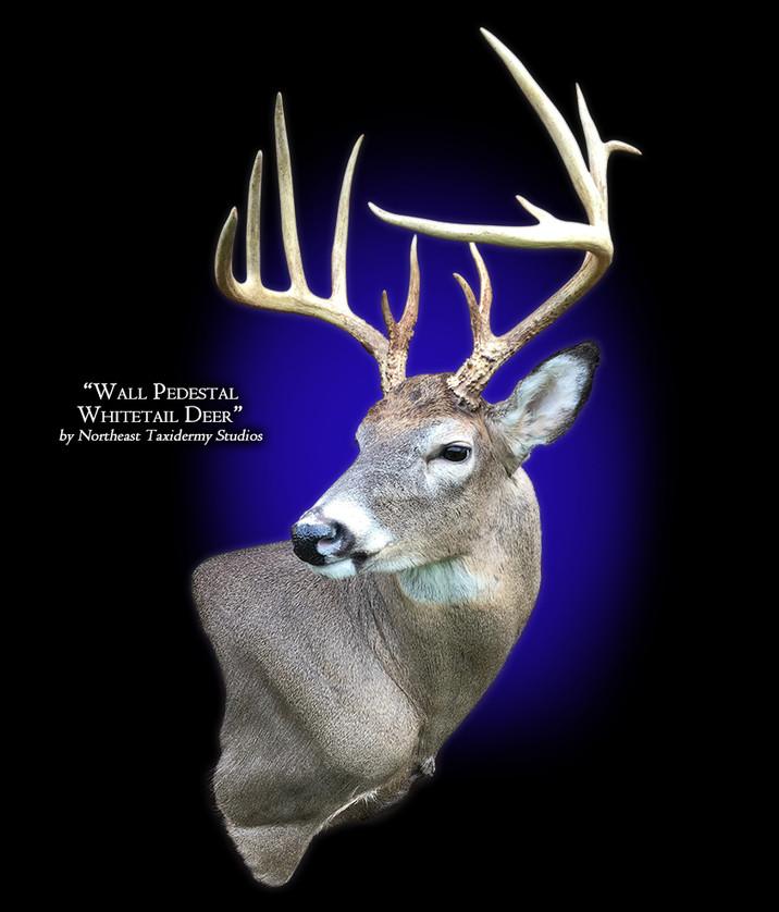 Whitetail Deer Wall Pedestal Mounts