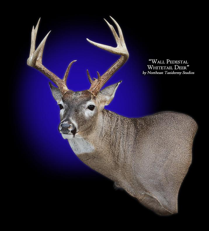 Whitetail Deer Wall Pedestal Left Mounts