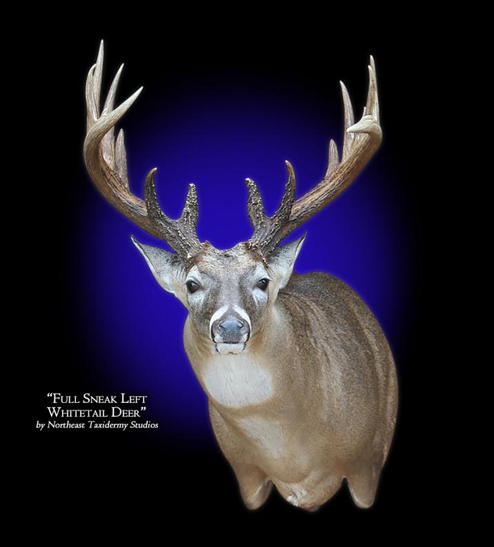 Whitetail Deer Full Sneak Left  Mounts