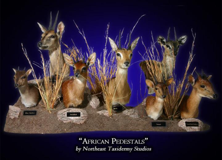 African Pedestals