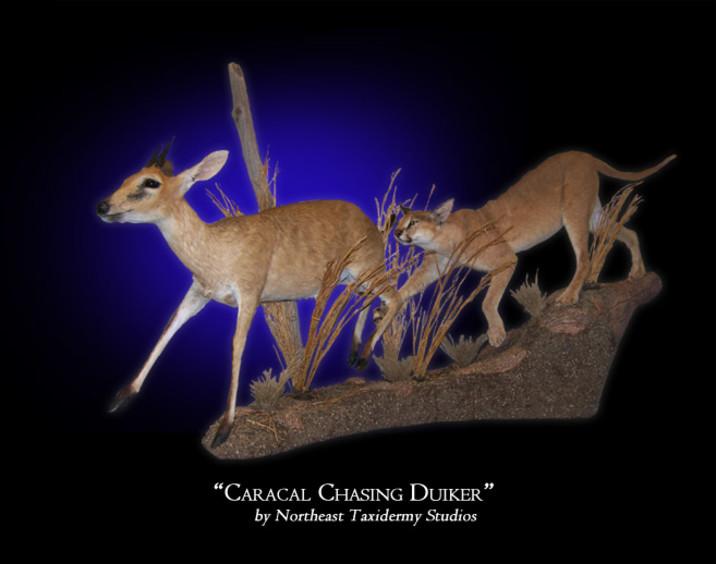 Caracal Chasing Duiker Mounts