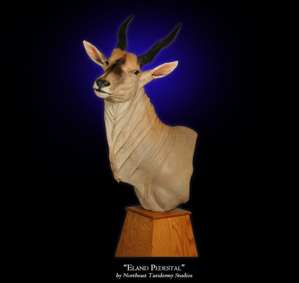 Eland Pedestal Mounts