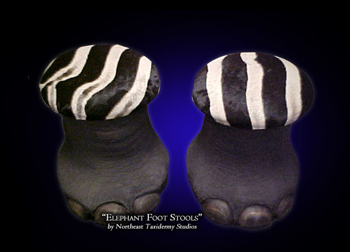 Elephant Foot Stools