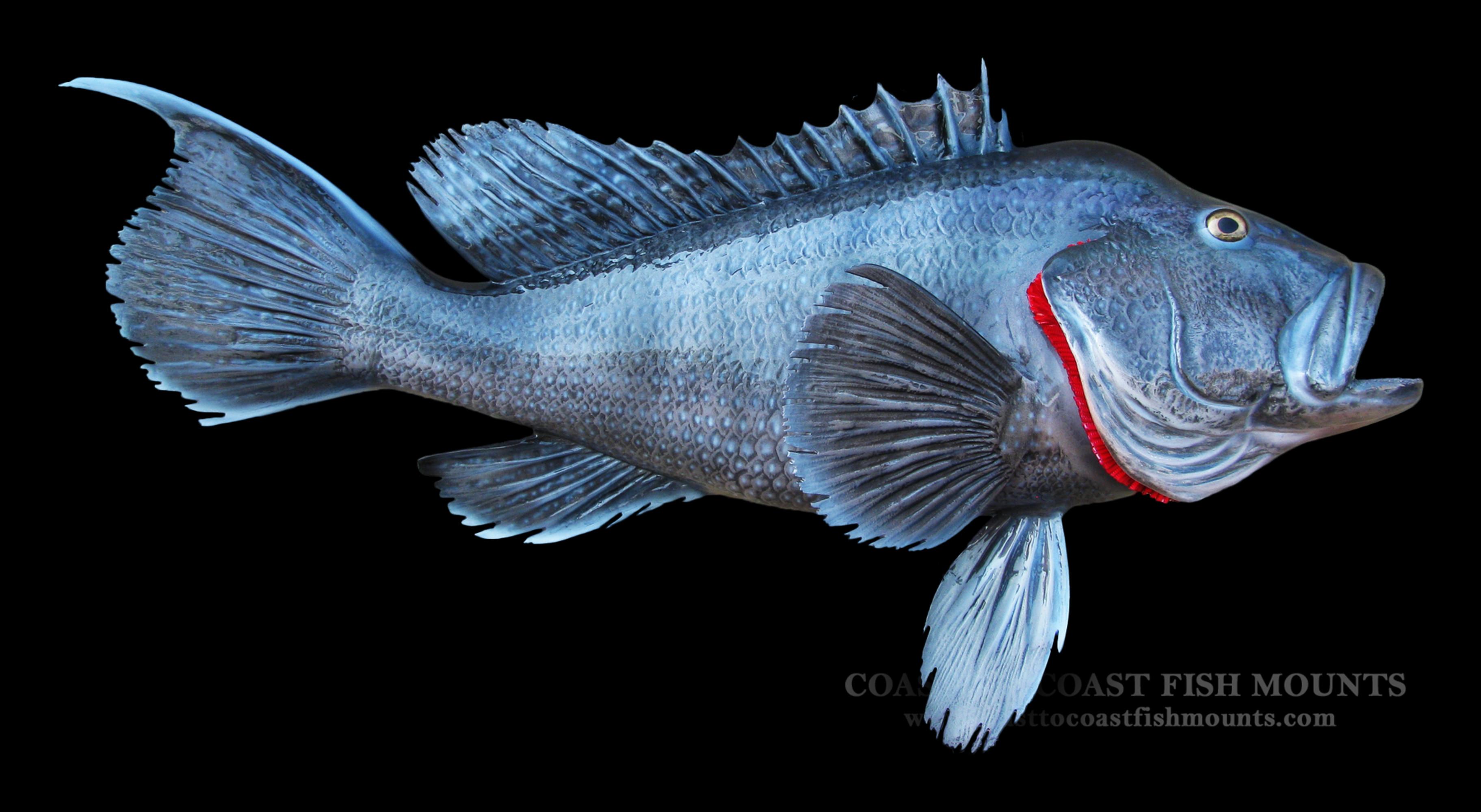 Sea bass fish mount and fish replicas coast to coast for Replica fish mounts