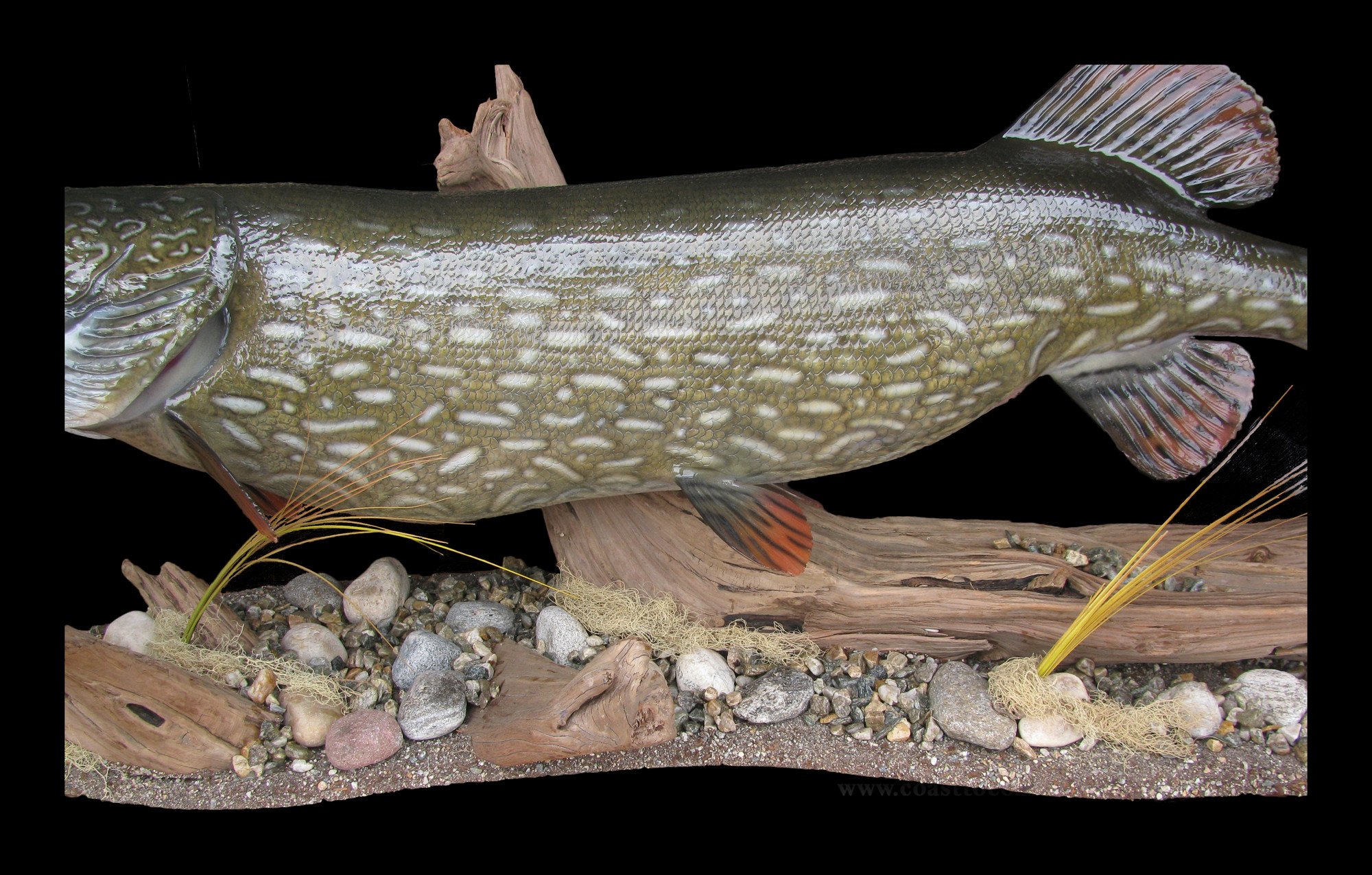 Northern pike fish mount and fish replicas coast to coast for Replica fish mounts