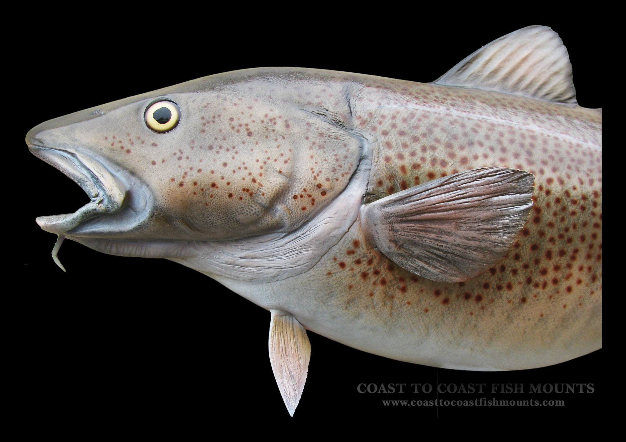 Cod fisheries