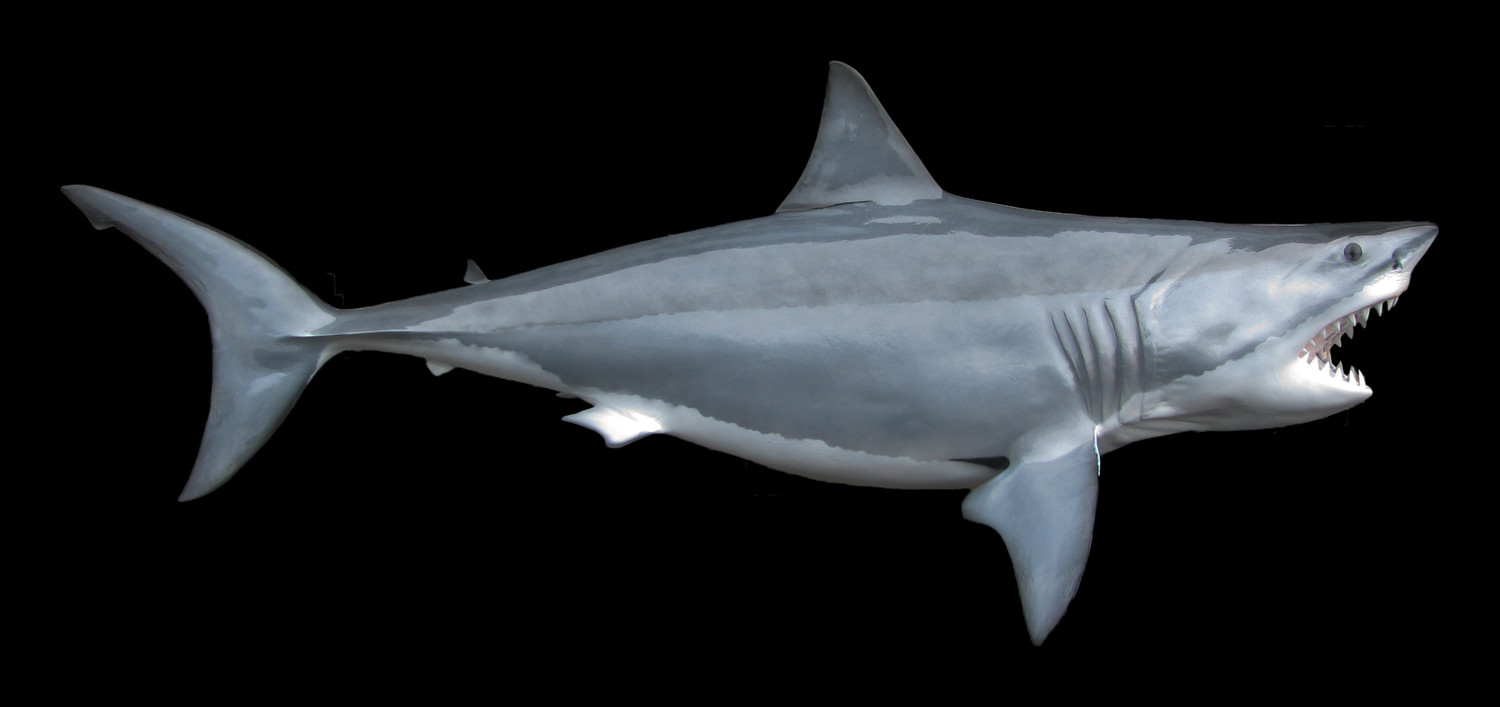 Great white shark fish mount and fish replicas for Great white shark fishing