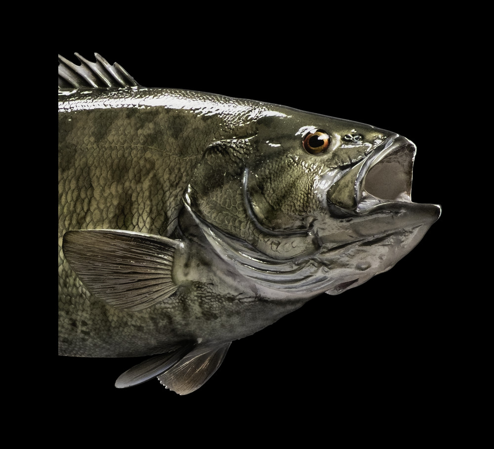 Smallmouth bass fish mount and fish replicas for Replica fish mounts
