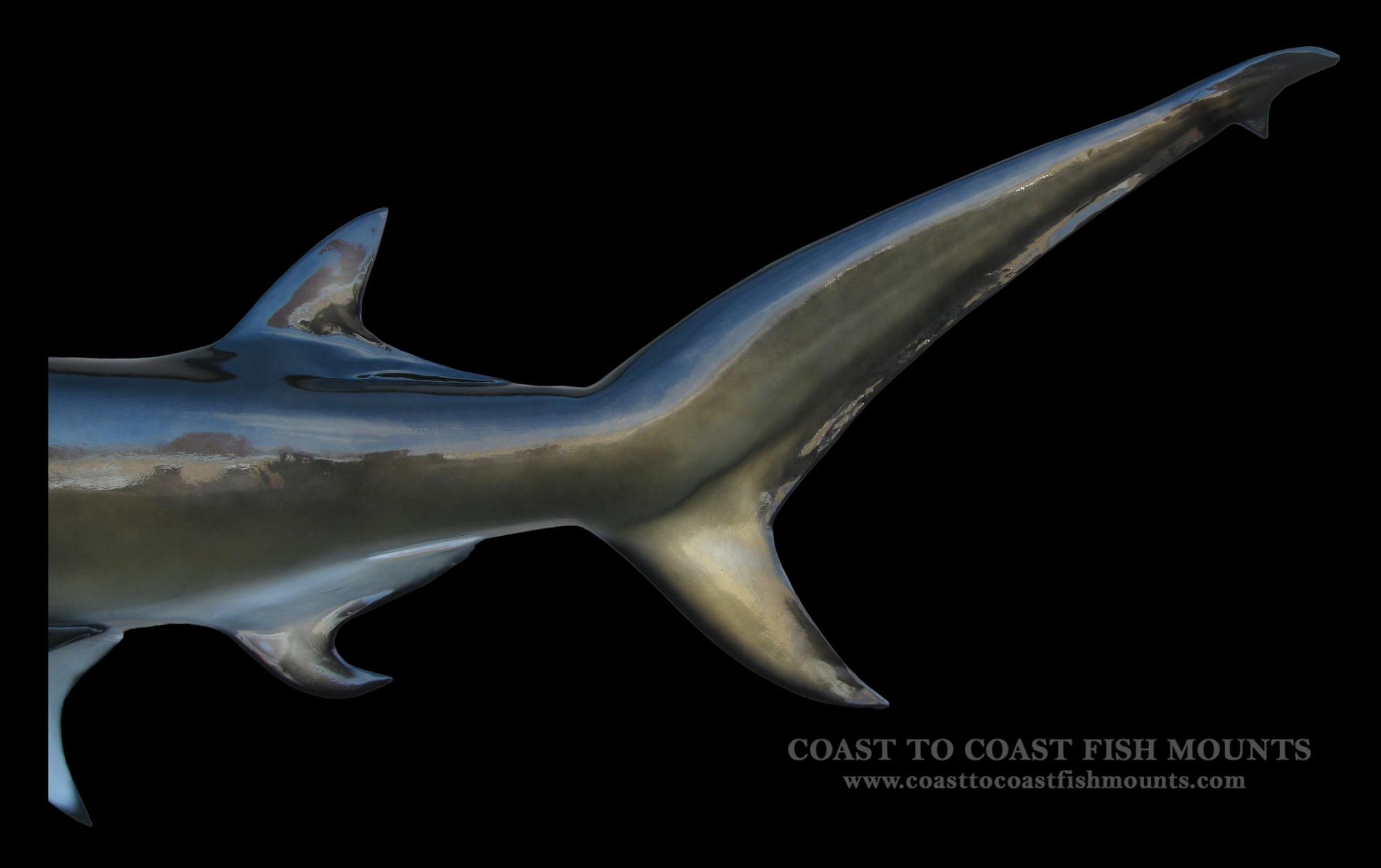 hammerhead shark fish mount and fish replicas coast to coast