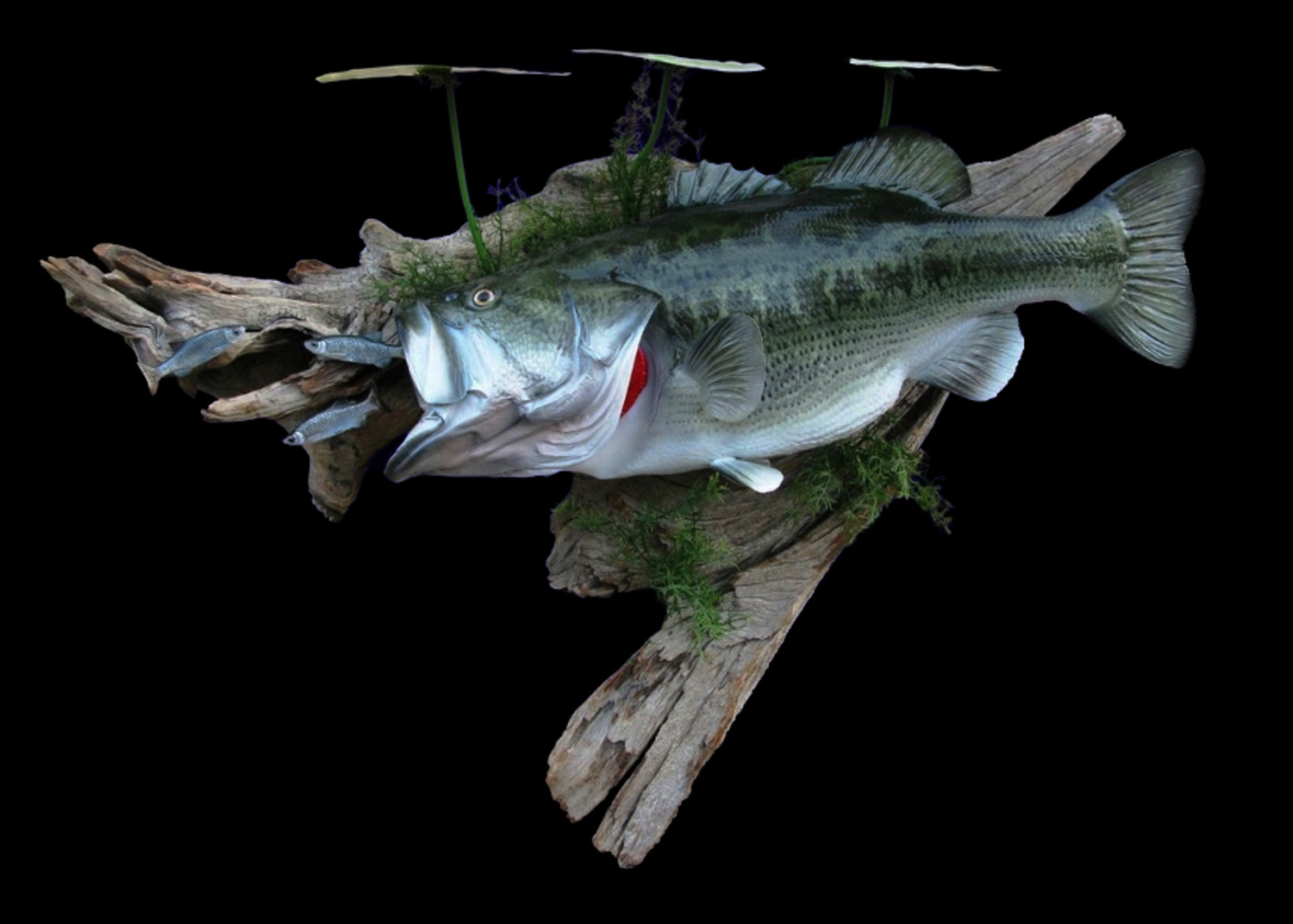 Largemouth bass fish mount and fish replicas for Replica fish mounts