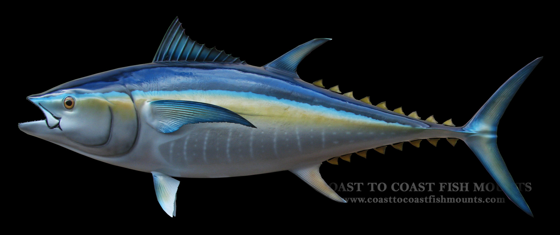 Match Paint Color Bluefin Tuna Fish Mount And Fish Replicas