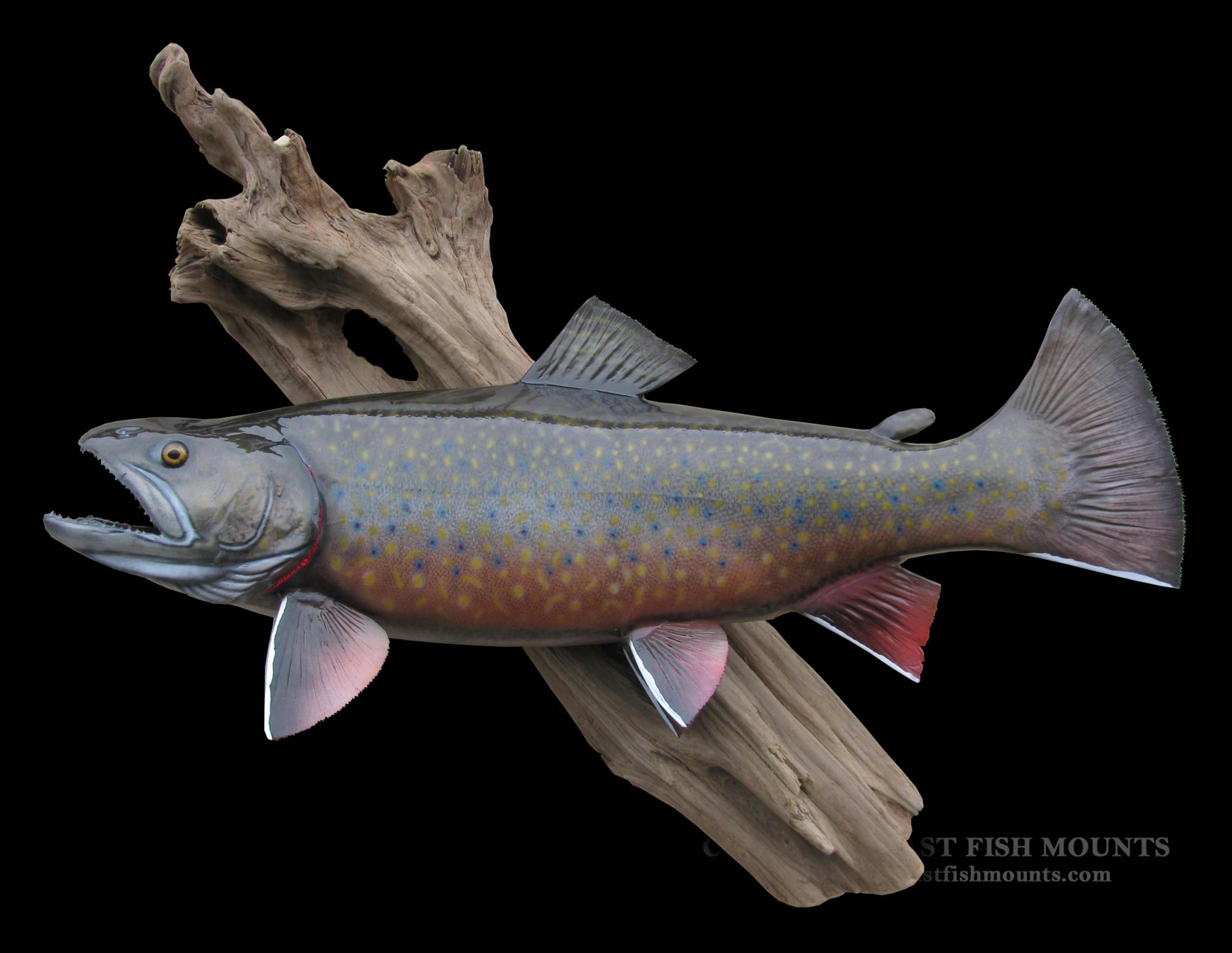 brook trout fish mount and fish replicas coast to coast
