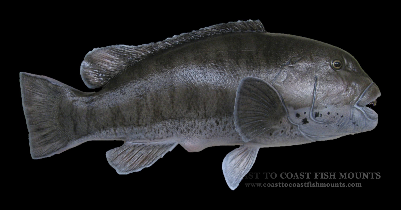 blackfish - photo #19