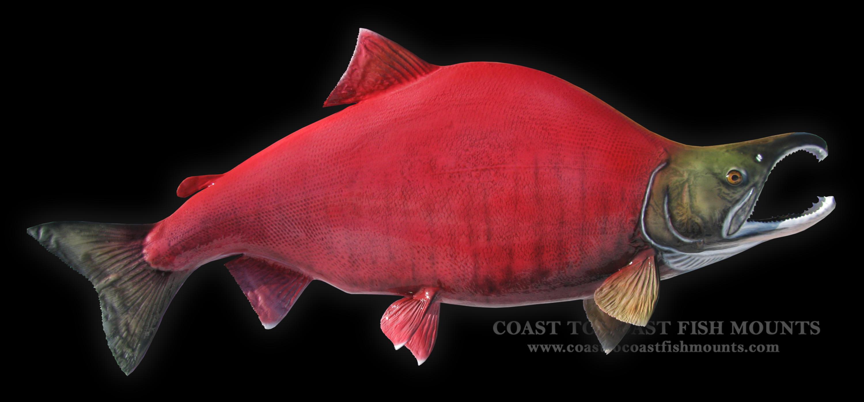 Sockeye Salmon Fish Mount and Fish Replicas | Coast-to-Coast