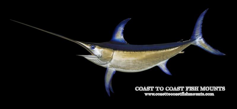swordfish fish mount and fish replicas coast to coast