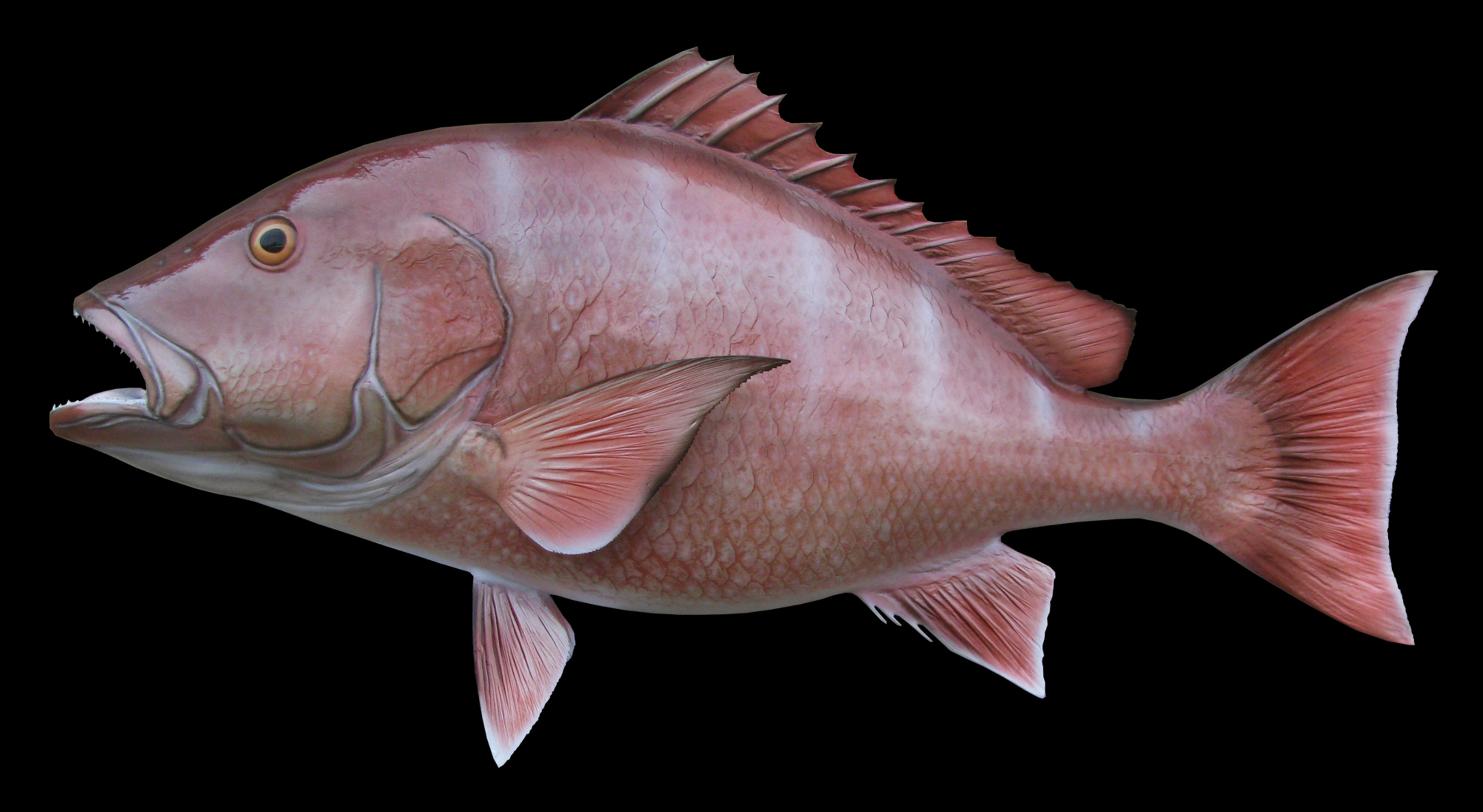 Red Snapper Fish Mount And Fish Replicas Coast To Coast